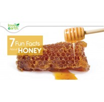 7 Fun Facts About Honey