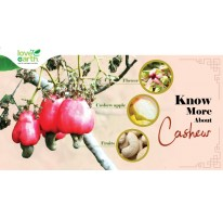 Know more about Cashew Nut