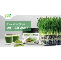 Know More About Wheatgrass