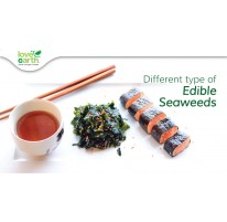Different Type of Edible Seaweeds
